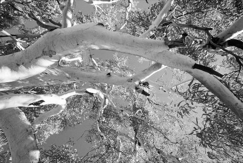 Bild: AP Digital - Treetops - 150g Vlies (4 x 2.7 m)
