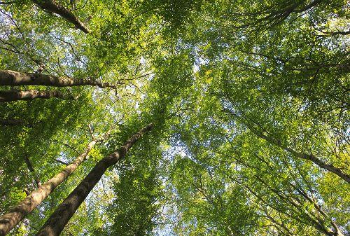 Bild: AP Digital - Canopy - 150g Vlies (2 x 1.33 m)
