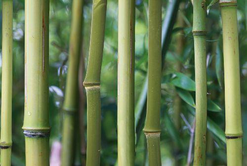 Bild: AP Digital - Bamboo - 150g Vlies