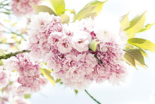 Bild: AP Digital - Springtime - 150g Vlies (4 x 2.67 m)