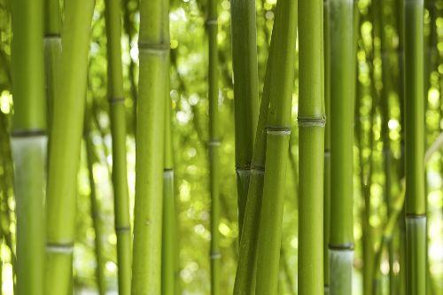 Bild: AP XXL2 - Bamboo In Daylight - 150g Vlies (4 x 2.67 m)