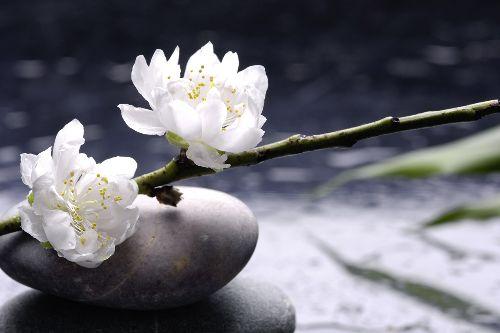 Bild: AP XXL2 - White Flowers - 150g Vlies (3 x 2.5 m)