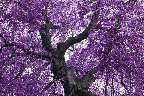 Bild: AP XXL2 - Purple Tree - 150g Vlies (4 x 2.67 m)