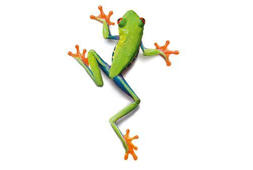Bild: AP Digital - Frog - SK Folie (3 x 2.5 m)