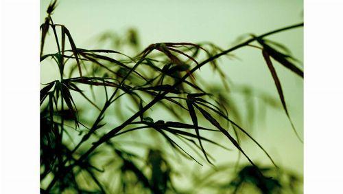 Bild: DM313-3 Leaves 360*265