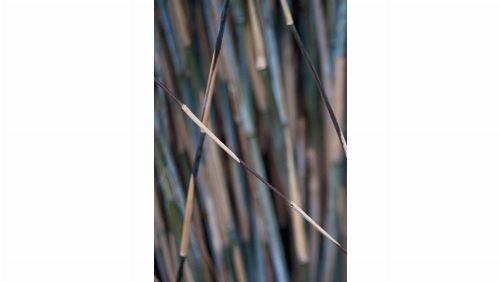 Bild: DM318-4 Bamboo 180*265