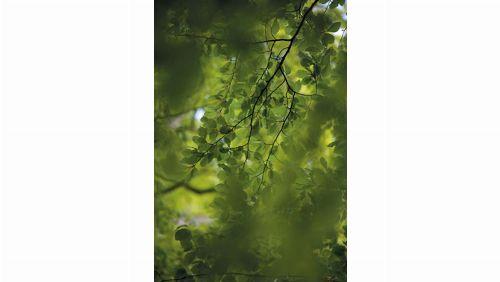 Bild: DM322-2 Green leaves 180*265
