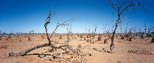 Bild: AP Digital - Outback - 150g Vlies (3 x 2.5 m)