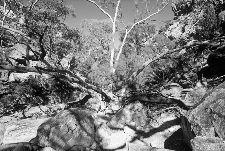 Bild: AP Digital - Rock Island - 150g Vlies (2 x 1.33 m)