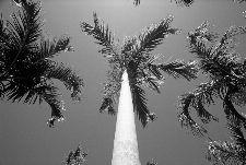 Bild: AP Digital - Palms - 150g Vlies (3 x 2.5 m)