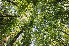 Bild: AP Digital - Canopy - 150g Vlies (4 x 2.67 m)