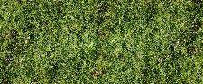Bild: AP Digital - Simple Green - 150g Vlies (3 x 2.5 m)