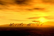 Bild: AP XXL2 - Giraffe In Savannah - 150g Vlies (4 x 2.67 m)