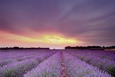 Bild: AP XXL2 - Lavender Field AS - 150g Vlies