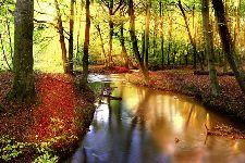 Bild: AP XXL2 - Forest Stream - 150g Vlies