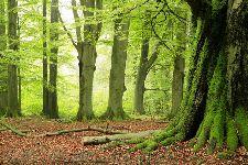 Bild: AP XXL2 - Forest - 150g Vlies (3 x 2.5 m)