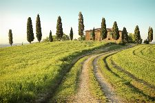 Bild: AP XXL2 - Toscana Summer - 150g Vlies (3 x 2.5 m)