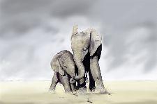 Bild: AP XXL2 - Elephant Family - 150g Vlies (4 x 2.67 m)
