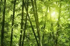Bild: AP XXL2 - Bamboo Forest - 150g Vlies (4 x 2.67 m)