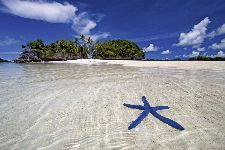 Bild: AP XXL2 - Blue Starfish - 150g Vlies (5 x 3.33 m)