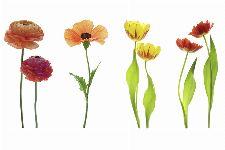 Bild: AP XXL2 - Red Flowers OW - 150g Vlies (4 x 2.67 m)