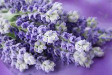 Bild: AP XXL2 - Lavender Bunch - 150g Vlies (4 x 2.67 m)