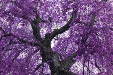 Bild: AP XXL2 - Purple Tree - 150g Vlies (3 x 2.5 m)