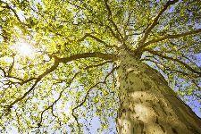 Bild: AP XXL2 - Green Canopy Trees - 150g Vlies (2 x 1.33 m)