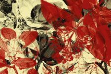 Bild: AP Digital - Botanical Garden - SK Folie (5 x 3.33 m)