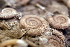 Bild: AP Digital - Fossil - SK Folie (2 x 1.33 m)