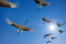 Bild: AP Digital - Fly Away - SK Folie (4 x 2.7 m)