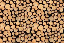 Bild: AP Digital - Stock Of Wood - SK Folie (4 x 2.7 m)