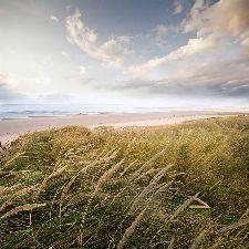Bild: AP Digital - Sylt - SK Folie (3 x 3 m)