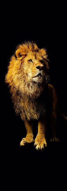 Bild: AP Panel - Lion, SK-Folie