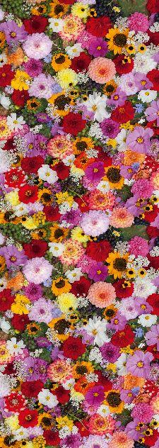 Bild: AP Panel - Flower fragrance , SK-Folie