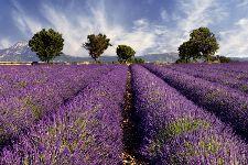 Bild: AP XXL2 - Lavender - SK Folie (4 x 2.67 m)