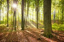 Bild: AP XXL2 - Forest Summer - SK Folie (3 x 2.5 m)