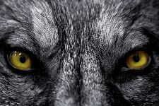 Bild: AP XXL2 - EyeTo Eye - SK Folie (2 x 1.33 m)