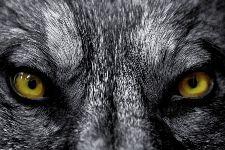 Bild: AP XXL2 - EyeTo Eye - SK Folie