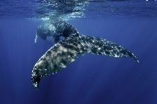 Bild: AP XXL2 - Whale Fin - SK Folie (5 x 3.33 m)