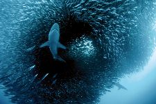 Bild: AP XXL2 - Predator - SK Folie (4 x 2.67 m)