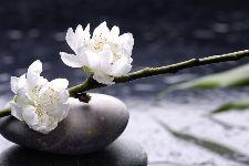 Bild: AP XXL2 - White Flowers - SK Folie (4 x 2.67 m)