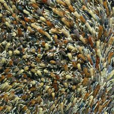 Bild: Teppich Spring (Braun; 200 x 300 cm)