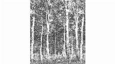 Bild: DM216-4 Woods 270*265