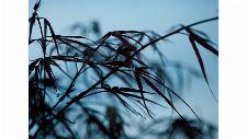 Bild: DM313-4 Leaves 360*265