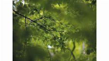 Bild: DM322-1 Green leaves 360*265