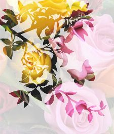 Bild: P0113015 Roses i-t-s 225*265