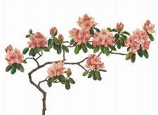 Bild: P0305018 Pink blossom 360*265