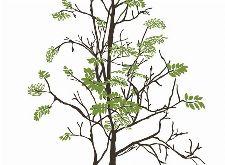 Bild: P0318018 Tender tree 180*265