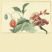 Bild: Eijffinger Fototapete Masterpiece 358118 - Tulip and Poppy (Creme)